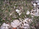 Kernéra des rochers