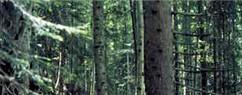 Landes et forêts