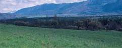 Prairies et pelouses