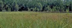 Zones humides de plaine